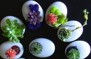 tận dụng vỏ trứng