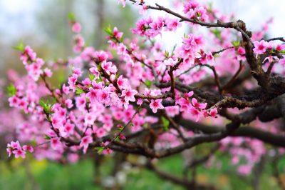 Ý nghĩa của 10 loại hoa chưng trong ngày Tết