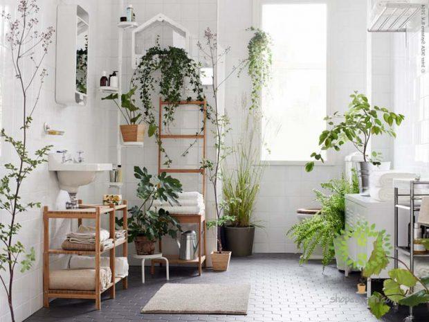 12 loại cây trồng trong nhà mang lại tài lộc và sức khỏe