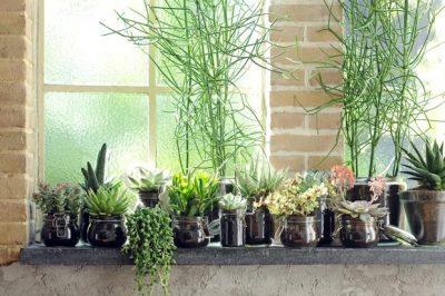 Đã phát hiện ra 5 loại cây cảnh trong nhà hỗ trợ sức khỏe cho bạn!