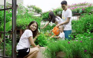 Trồng rau xanh tại nhà