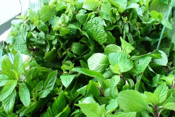 bảo quản rau thơm tươi lâu