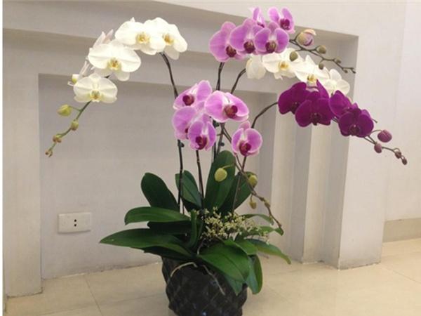 hoa ý nghĩa tặng thầy cô