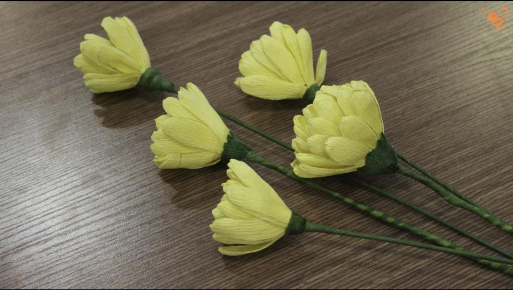 hoa cúc đại đoá