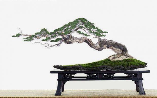 Trang trí nhà với 7 loại bonsai mini đón tài lộc!