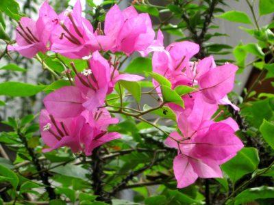 Những loại cây cảnh chịu nắng giỏi, chịu hạn tốt