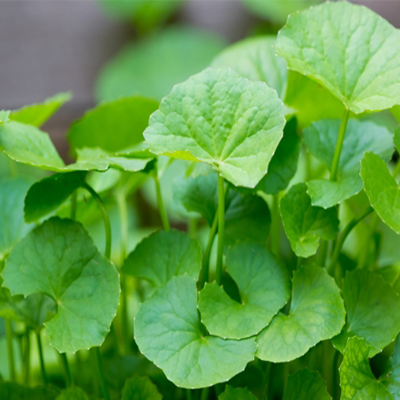 Các loại rau mát gan mà bạn nên biết