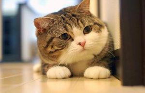 khử mùi nước tiểu mèo