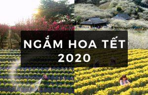 ngam-hoa-tet-2020