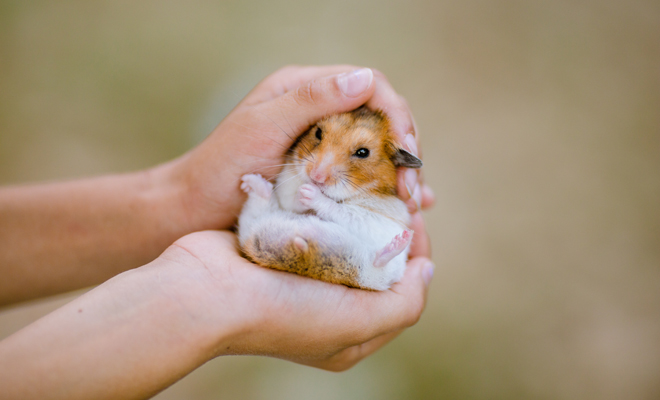 cham-soc-thu-cung-hamster