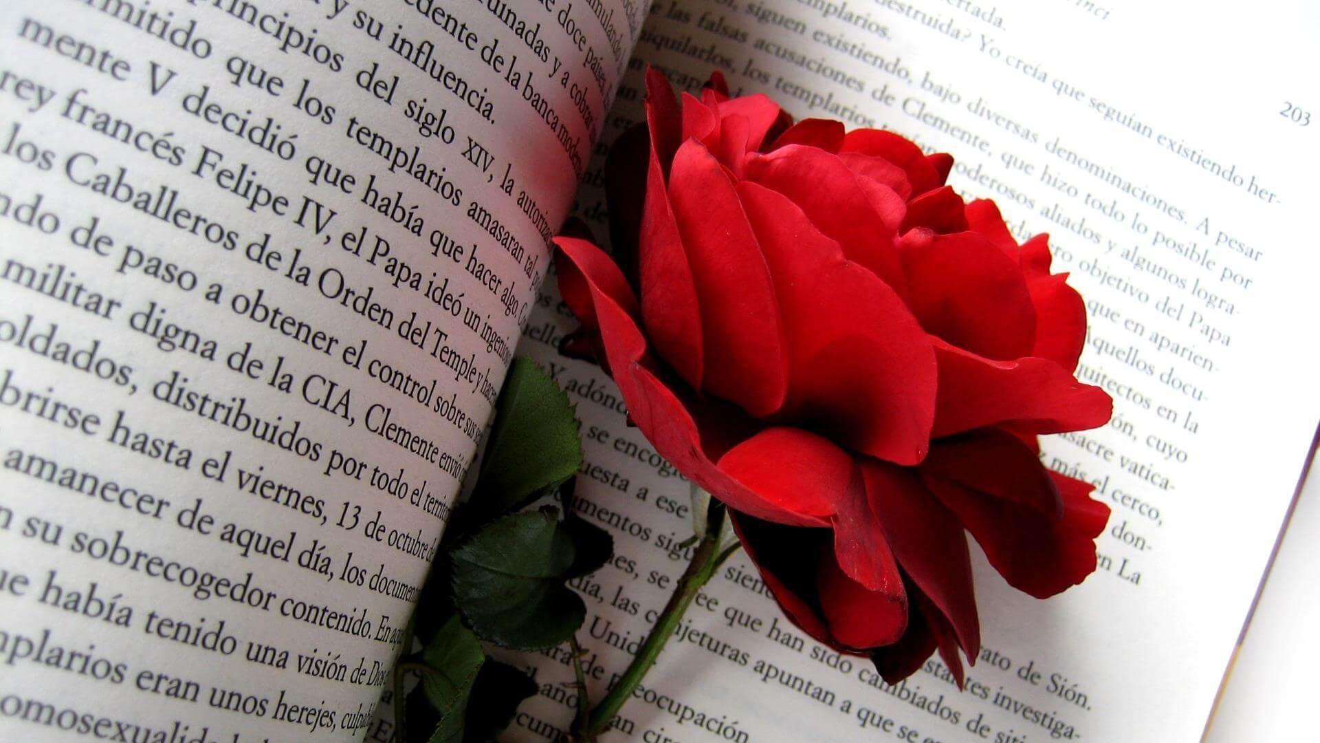 hoa-sach-tay-ban-nha-valentine