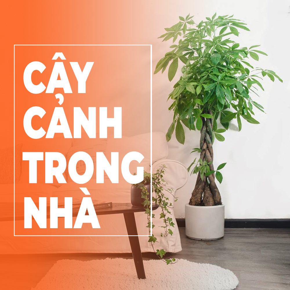 nhung-cach-cham-soc-cay-canh-trong-nha-luon-xanh-tuoi