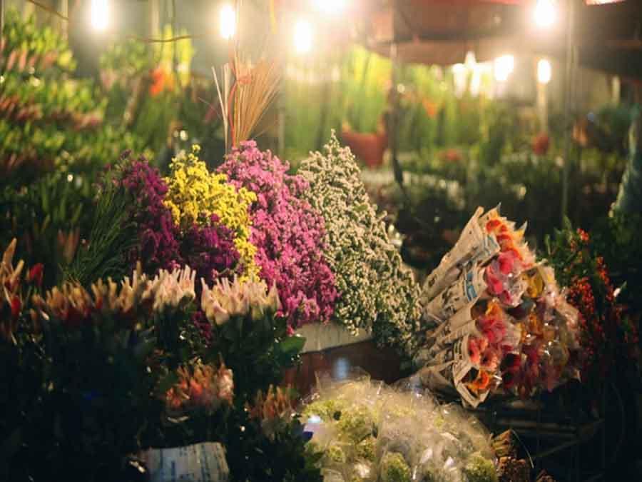 các loại hoa tết dễ trồng