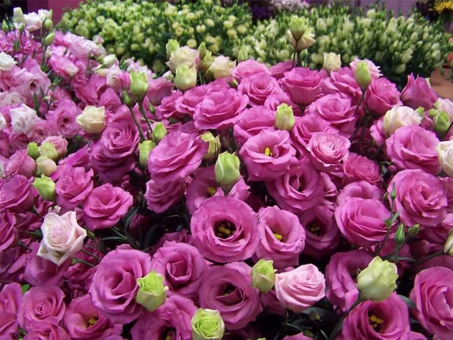 Chợ hoa Hồ Thị Kỷ là chợ hoa tết Sài Gòn