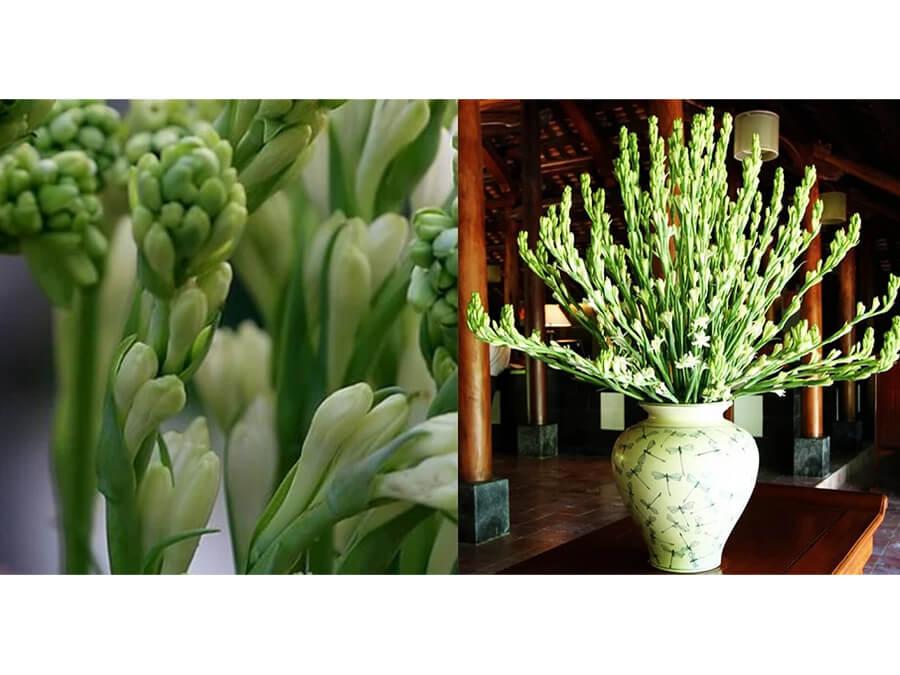 hoa huệ chưng bàn thờ ngày tết