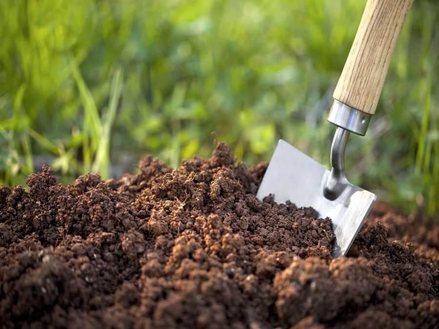 chăm sóc mai bằng cách thay đất