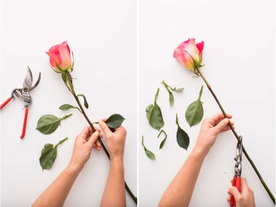 tải cành cách giữ hoa tươi lâu ngày Tết
