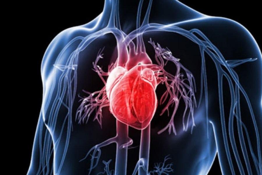 đậu phộng có tác dụng tốt cho bệnh tim mạch vành