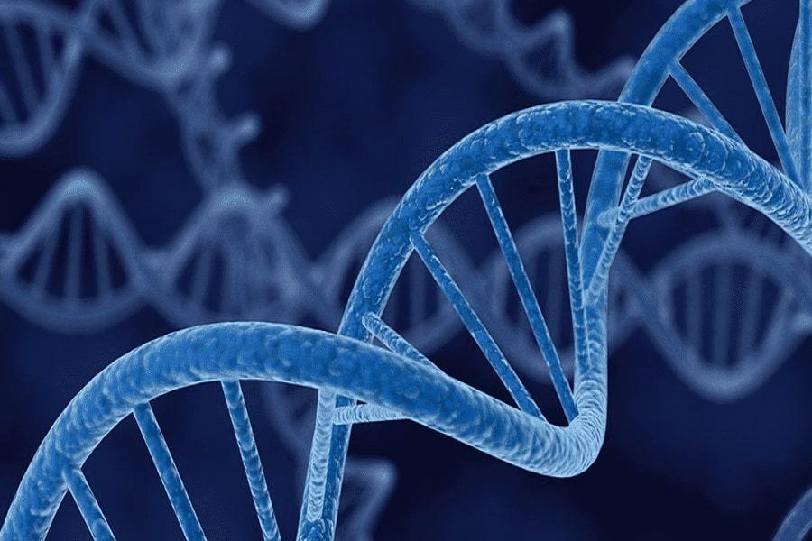 cấu trúc gen