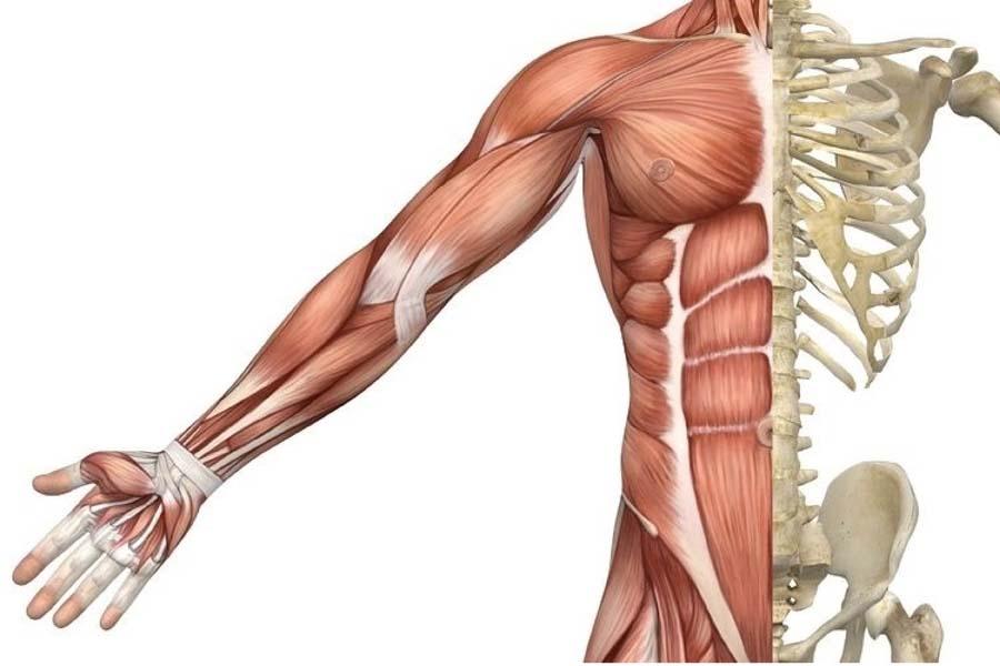 Tập thể dục giúp tăng sức khỏe cơ bắp và xương