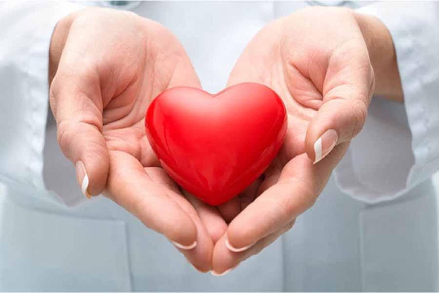 nhụy hoa nghệ tây có tác dụng hỗ trợ tim mạch